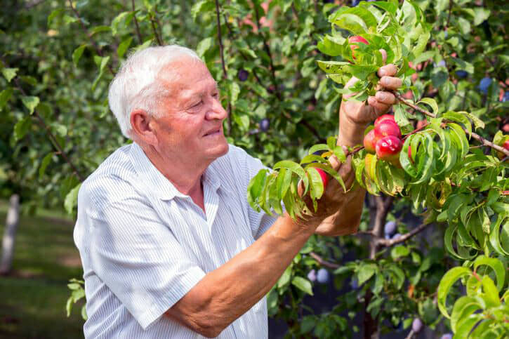 how therapeutic gardening helps people with alzheimers and dementia