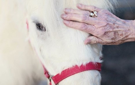 Equine Therapy for Dementia